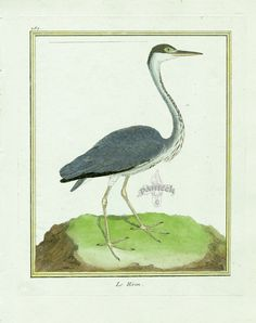 Martinet c1770's: Grey Heron