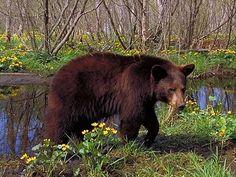 cool bears - Google Search