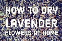 It's easy to harvest and dry your own lavender. This article explains how to cut and dry lavender, when to do it, and how to store it.