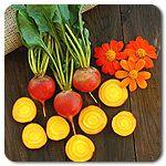Organic Touchstone Gold Beet