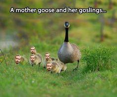 Ryan Goslings...this is amazing!