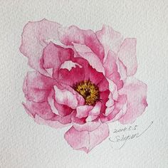 Illustration Now ( Watercolor And Ink, Watercolor Flowers, Watercolor Paintings, Watercolors, Peony Painting, Watercolor Ideas, Illustration Blume, Watercolor Illustration, Arte Floral