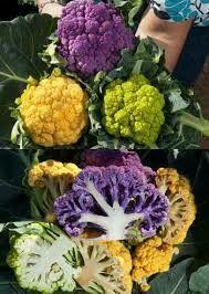 oranje (jaffa f1 hybride) groene (vitaverde f1 hybride) en paarse (grafitti f1 hybride) bloemkool