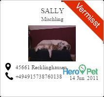 Sally/Mischling/vermisst