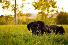 Gizmo hiding behind grass - stock photo