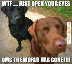 Dog memes – Two labradors Animal Memes, Funny Animals, Dachshund Cake, Dog Memes, Dog Funnies, Cow Cat, Funny Images, Funny Dogs, Squirrel