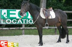 Poney en location pour centre #equestre , #poney #club ou #cavalier