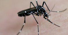 Zika: Estados Unidos alertam gestantes a evitarem viagem ao Brasil