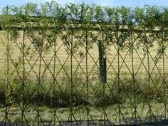 Bilderesultat for willow fence