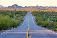 Organ Pipe Cactus National Monument, Sonoran Desert, Arizona #America