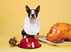 Thanksgiving Safety Tips for all Your Pets - http://guardianpetsitters.com/thanksgiving-safety-tips-for-all-your-pets/