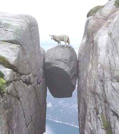 Adventurous Sheep. That's amaZing!! I want courage and self assurance like that!