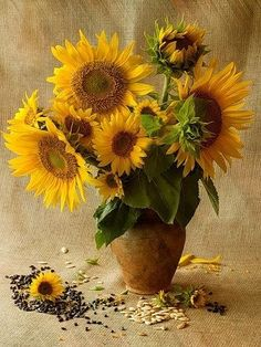 Still life photo, Sunflower Pictures, Sunflower Art, Arte Floral, Oil Painting Flowers, Watercolor Flowers, Art Flowers, Sunflower Photography, Sunflowers And Daisies, Still Life Art
