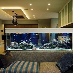 An aquarium is a pleasing method of displaying that you just love nature and that you have a must cope with it. A home aquarium is likely one of the Aquarium Diy, Wall Aquarium, Aquarium Design, Marine Aquarium, Aquarium Decorations, Aquarium Fish Tank, Aquarium House, Aquariums Super, Amazing Aquariums