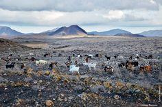 """""""Una de cabras""""  Foto de Leticia Barreto"""