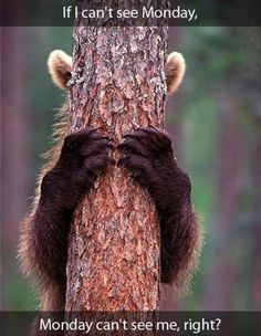 funny Monday morning pictures, bear hiding his eyes