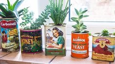 Succulents antique cans
