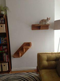 Cat shelf!