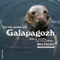 Découvrez toutes les appropriations des acteurs du tourisme bretons dans le cadre de la campagne #DépaysezVousenBretagne  Création : Comité Régionale du Tourisme Bretagne Dating, Rural Area, Brittany, Tourism, Baby Born