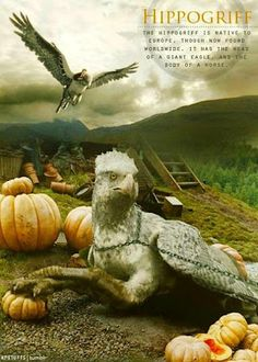 A Hippogriff has front legs, wings, and head of a giant eagle and the body, hind legs and tail of a horse.