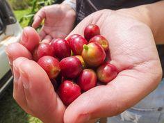 Auf Besuch im Kaffee-Anbaugebiet von APAS - mmunterwegs
