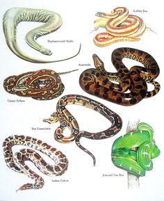 Las serpientes goma Boa Anaconda alfombra por mysunshinevintage