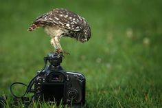 phototoartguy:  I think the ISO is a bit low! by Robin Lowry on Flickr.