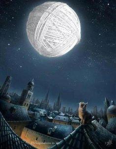 Cat's Moon