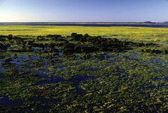 Pantanal - Biomas brasileiros
