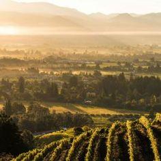 Newton Vineyard | Discover all things #NapaValley at NapaValley.com California Wine, California Travel, Napa Valley Wineries, Napa Sonoma, The Beach Boys, St Helena, Mural Ideas, Wine Country, Santa Barbara