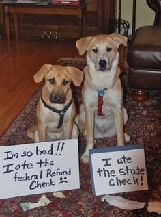 """How do you explain this to the IRS?  """"Uh, you're not going to believe this but my dog at my refund..."""""""