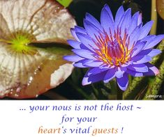 ... your #nous is not the host ~ for your heart's vital #guests !