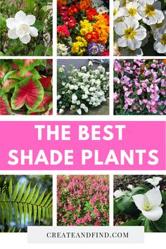 best plants to grow in shade. Plant these amazing flowers and plants in the shady areas of your yard or garden this yearThe best plants to grow in shade. Plant these amazing flowers and plants in the shady areas of your yard or garden this year Shade Plants Container, Shade Garden Plants, Container Flowers, Flowering Plants For Shade, Garden Pots, Container Gardening, Indoor Shade Plants, Planters For Shade, Shade Tolerant Plants