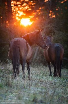 Gosia Mąkosa Equine Art & Photography Sunrise In Bieszczady, hucul horses, SK Tabun — with Lis Prizet and Livvy Roddy White at Tabun - Stadnina Koni Huculskich.