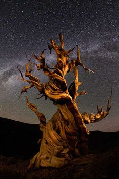 Perseid Meteor Shower.  These ancient Bristlecone Pines are actually the oldest trees on Earth, some close to 5,000 years old. Their twisted, weathered, and gnarled shapes made for perfect foreground subjects to contrast the meteor shower. Photo by David Hatfield