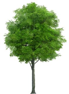 Tree Cut Outs Free Download Website Plan PngTree