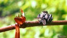 Spider eating