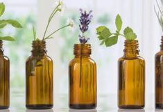 Essential oils are used as natural remedies for various conditions and to improve the health of skin, hair and body. Learn about the top essential oil uses and essential oil benefits. Top Essential Oils, Young Living Essential Oils, Essential Oil Blends, Loción Facial, Ravintsara, Eucalyptus Oil, Oil Benefits, Carrier Oils, Lavender Oil