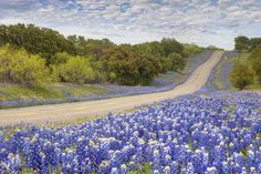 Images from Texas... and other favorite places | Texas Bluebonnet Highway - Texas Hill Country