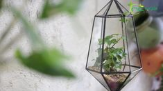 geometric  terrariums Terrarium Containers, Terrariums, Floating Frame, Plant Holders, Air Plants, Urn, Container Gardening, Flower Pots, House Warming