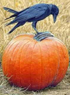 """ I wish dis came wif instructions....I wants teh peck dis into a skull pumpkin."""