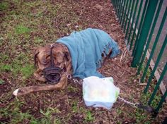 Muzzled and terrified dog left tied to fence in Bramley on New Year's Eve