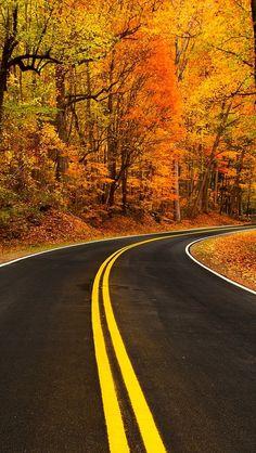 Wallpaper IPhone Autumn