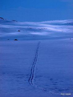HARDANGERVIDDA, NORWAY. TONE LEPSOES PICTURES.