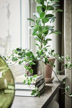 The window sill, a solution that I miss from home - perfect place for pots, plants or nice trinkets you like . Green Plants, Window Decor, Home, House Window Design, Home And Garden, Window Sill, Indoor Gardens, Interior Plants, Indoor Garden