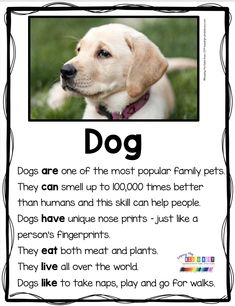 PRIMARY WRITING – kindergarten and first grade animal reports and informational writing – nonfiction reading and writing – zoo animals … Kindergarten Writing, Kindergarten Freebies, Homeschool Kindergarten, Literacy, Preschool, Informational Writing, Nonfiction, Writing Graphic Organizers, First Grade Writing