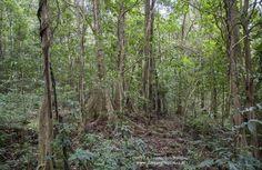 Trekking in Mbeliling forest - Flores island Komodo, Adventure Tours, Trekking, Exotic, Island, Plants, Photography, Block Island, Fotografie