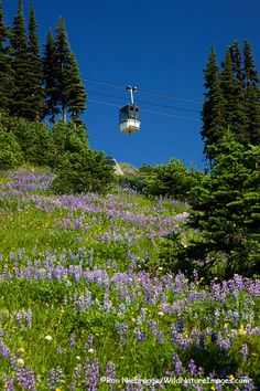 The Whistler Village Gondola transports skiers and hikers up and down Whistler Mountain, Whistler, British Columbia, Canada