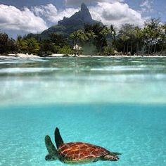#seaturtle #sea #ocean #tropical #island #paradise - @Debbie Lewis- #webstagram