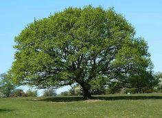diário dos escritores: Alma de Árvore
